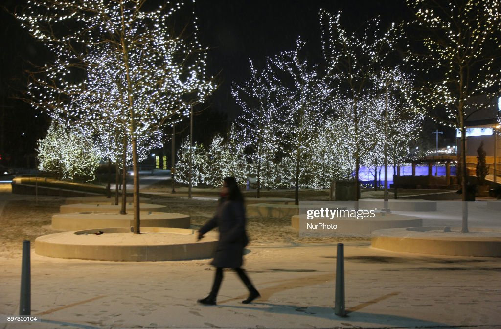 Trees Decorated With Lights During The