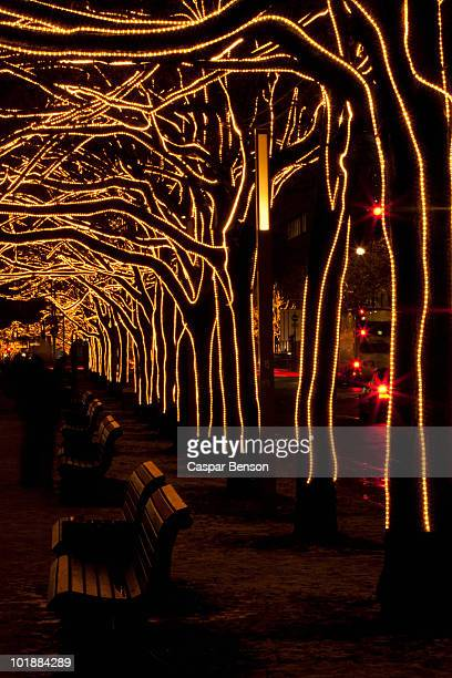 Trees decorated with lights, Unter Den Linden, Berlin, Germany