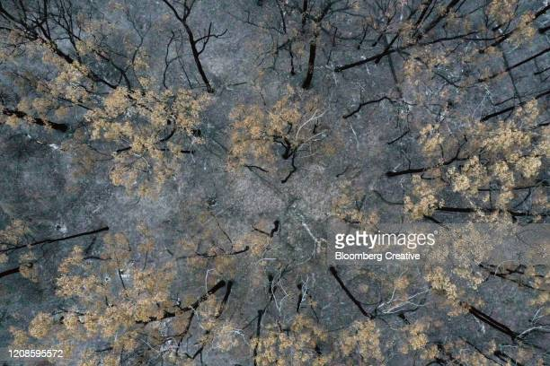 trees destroyed by forest wildfires - natural disaster stock pictures, royalty-free photos & images