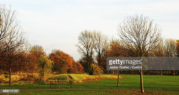 Trees During Autumn In Park