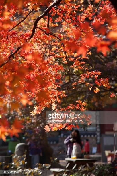 trees during autumn - jeonju stock photos and pictures