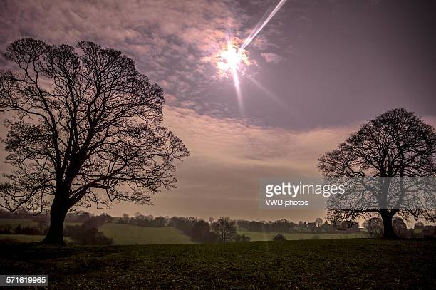 Trees during solar eclipse, March 2015