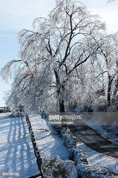 Trees encased in a heavy layer of ice and snow from a winter storm in Kentucky USA