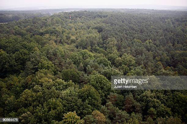 Trees extend for miles into the forest of Foret d'Othe as french military police patrol in search of the fugitive JeanPierre Treiber on September 10...