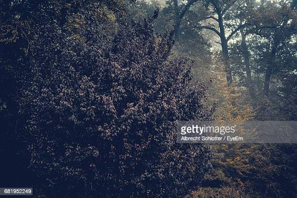 trees forest during autumn - albrecht schlotter stock photos and pictures