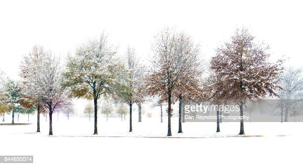Trees forming pattern against white sky in snow