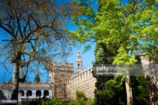 Trees framing the Cathedral in Seville