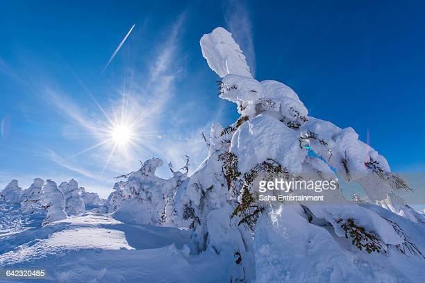 trees freeze that looks like rabit - 深い雪 ストックフォトと画像