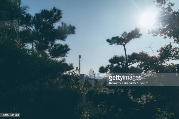 trees growing against clear sky during sunny day - koukichi ストックフォトと画像