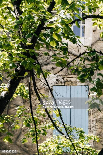 Trees Growing Against House