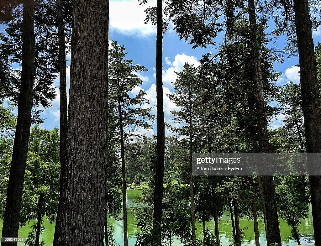 Trees Growing Against Lake In Forest : Stock Photo