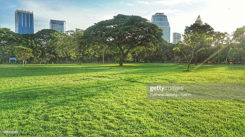 Trees Growing Against Sky At Park In City : Foto de stock