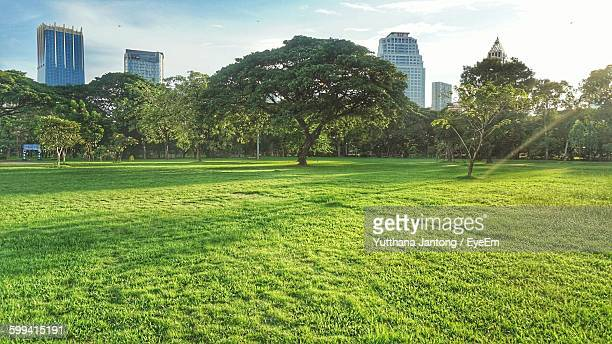 trees growing against sky at park in city - public park stock photos and pictures