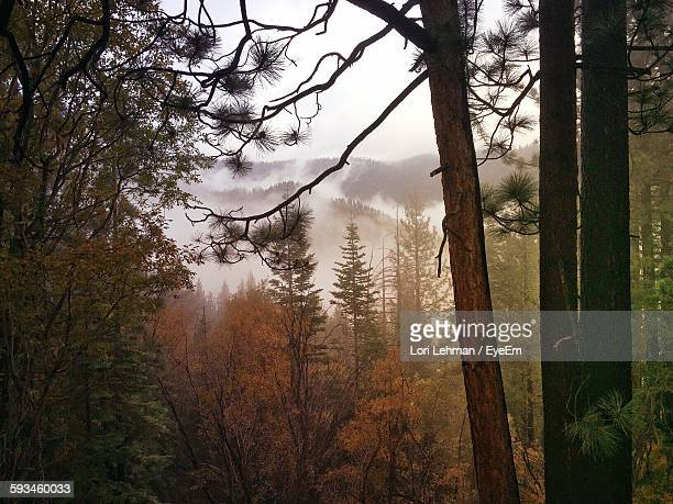 Trees Growing Against Sky In Forest During Autumn