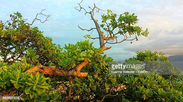 trees growing against sky - the webster stock pictures, royalty-free photos & images