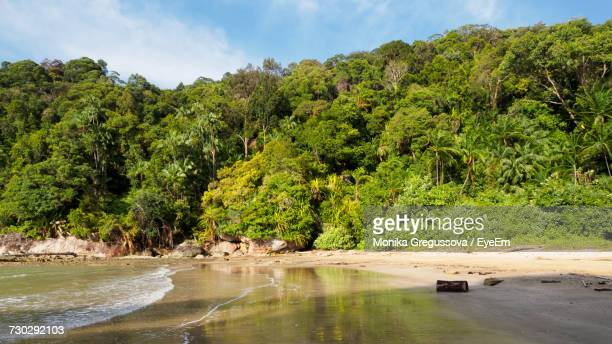 trees growing at beach - monika gregussova stock pictures, royalty-free photos & images