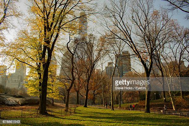 Trees Growing At Central Park During Autumn In City