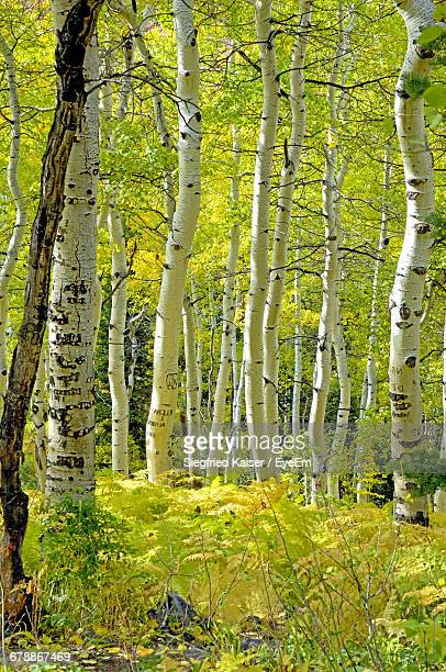 Trees Growing At Forest