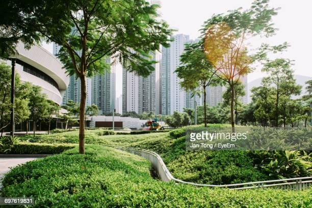 trees growing at park by buildings in city - gedeihend stock-fotos und bilder