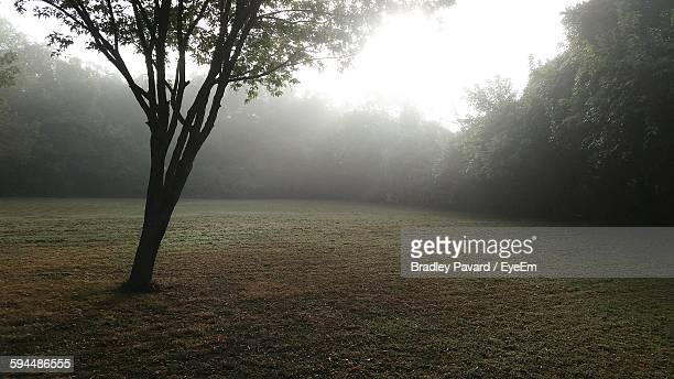 trees growing at park during foggy weather - pavard stock pictures, royalty-free photos & images