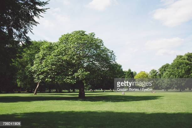 trees growing at park on sunny day - bortes ストックフォトと画像