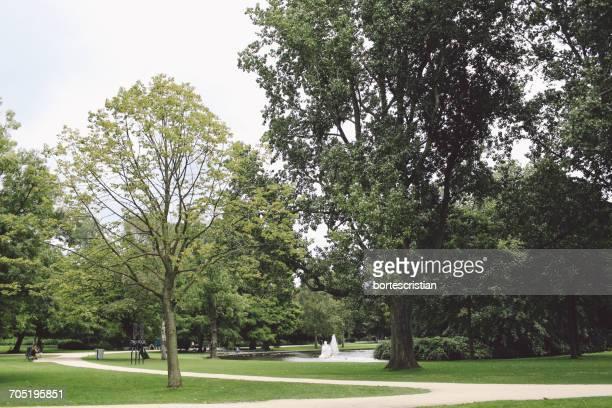 trees growing at park - bortes - fotografias e filmes do acervo