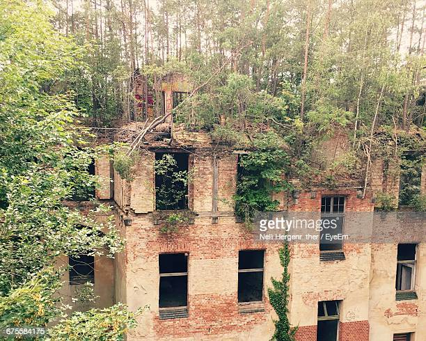 Trees Growing By Abandoned Building