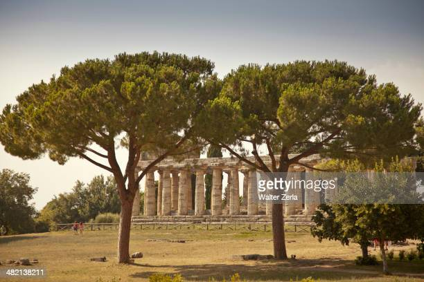 Trees growing by ancient ruins, Paestum, Campania, Italy
