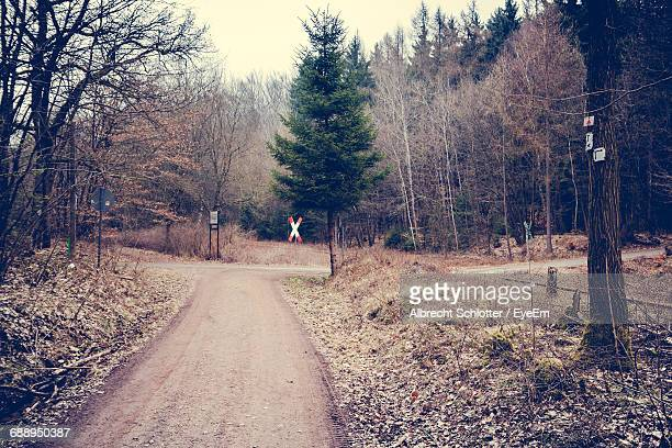 trees growing by empty road at forest - albrecht schlotter stock pictures, royalty-free photos & images