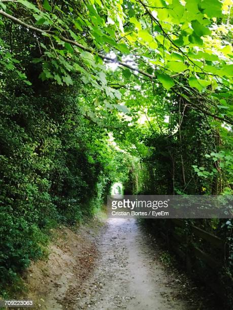 trees growing by empty walkway at forest - bortes photos et images de collection