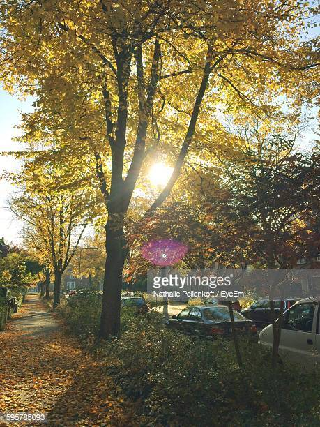 trees growing by footpath during autumn - nathalie pellenkoft stock pictures, royalty-free photos & images