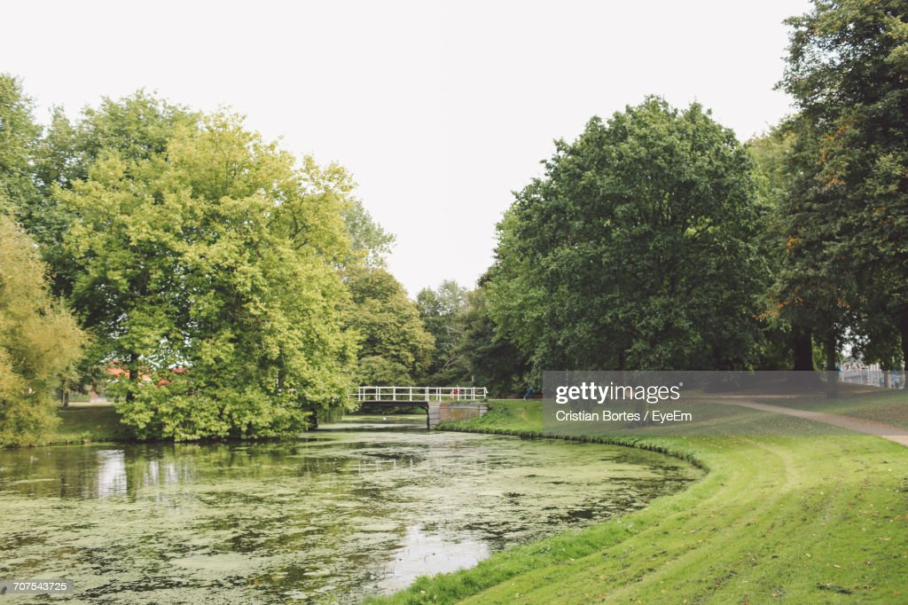 Trees Growing By Moss Covered Pond At Park : Stock Photo