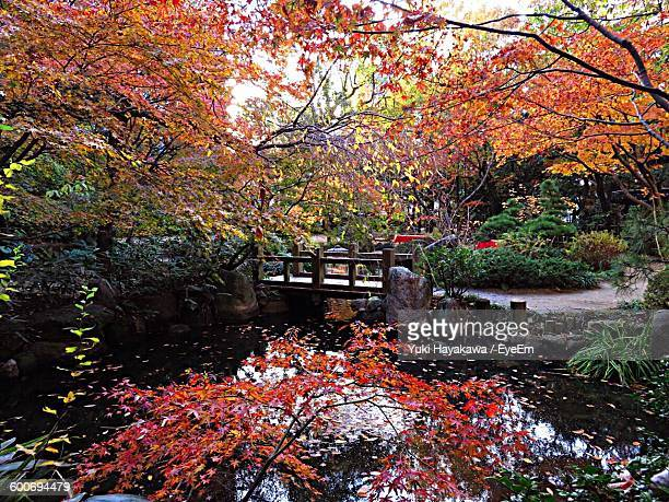 Trees Growing By Pond In Garden During Autumn