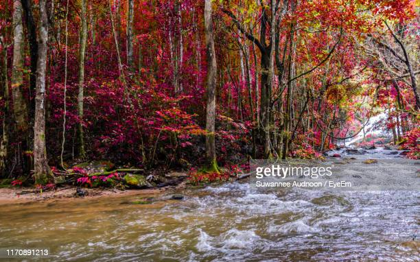 trees growing by river in forest during autumn - カンチャナブリ県 ストックフォトと画像