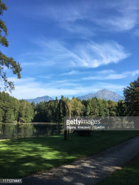 trees growing by road against sky - kranj stock pictures, royalty-free photos & images