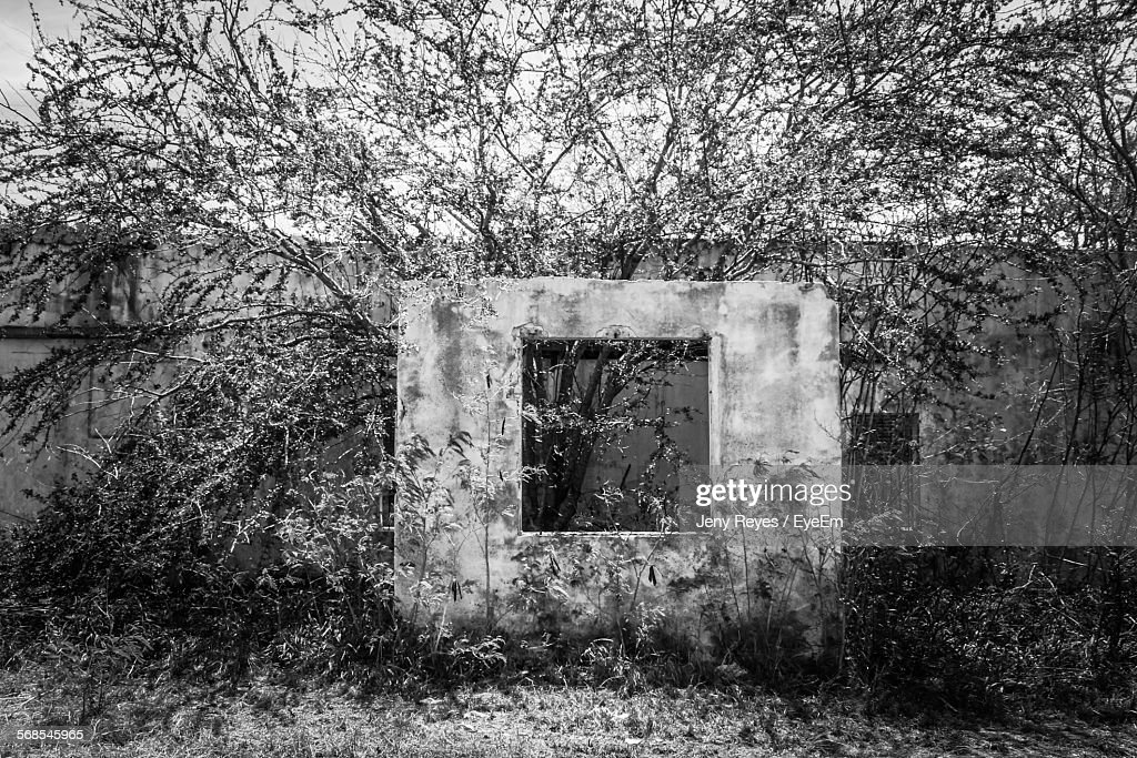 Trees Growing In Abandoned House : Stock Photo