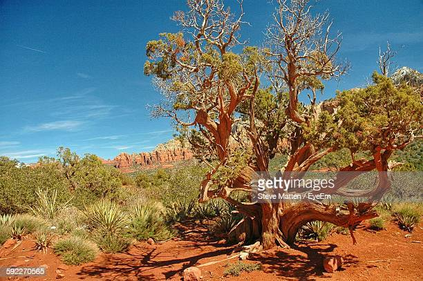 trees growing in desert against sky - steve matten stock pictures, royalty-free photos & images
