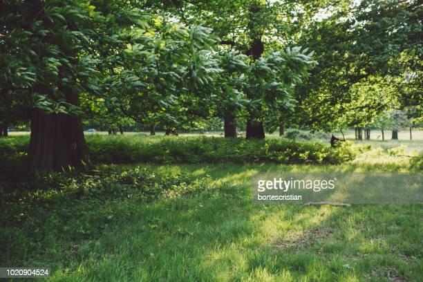 trees growing in field - 庭 ストックフォトと画像