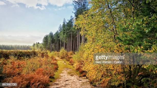 trees growing in forest against sky during autumn - woodland stock pictures, royalty-free photos & images