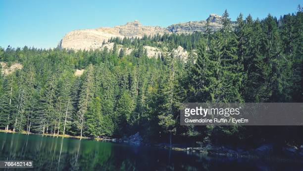 trees growing in forest against sky - sallanches stock pictures, royalty-free photos & images
