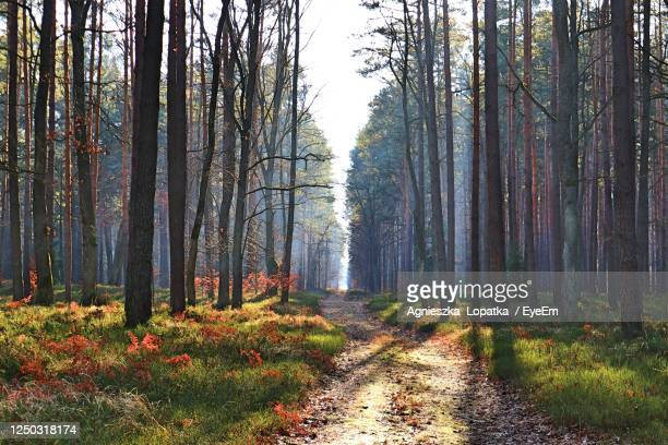 trees growing in forest during autumn - poland stock pictures, royalty-free photos & images