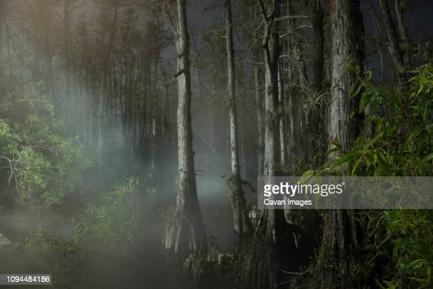 trees growing in forest during foggy weather - broek stockfoto's en -beelden