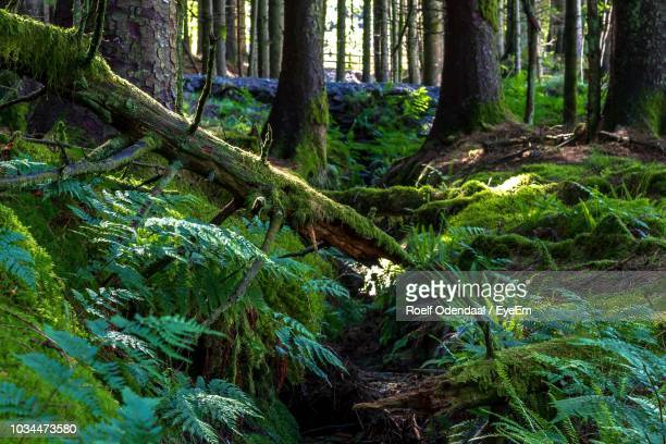 trees growing in forest - muschio flora foto e immagini stock