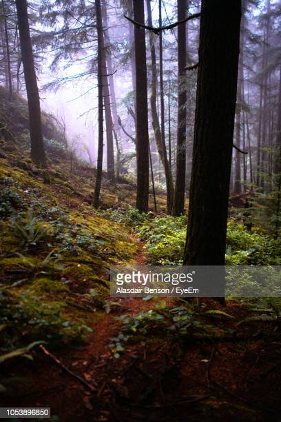 trees growing in forest - pinaceae stock pictures, royalty-free photos & images