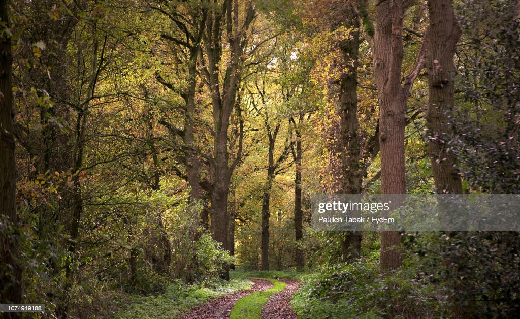 Trees Growing In Forest : Stockfoto