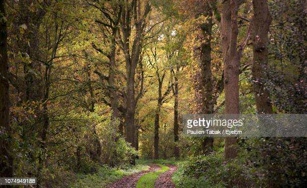 trees growing in forest - paulien tabak stock pictures, royalty-free photos & images
