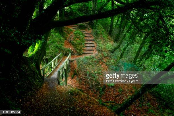 trees growing in forest - 2017 stock pictures, royalty-free photos & images