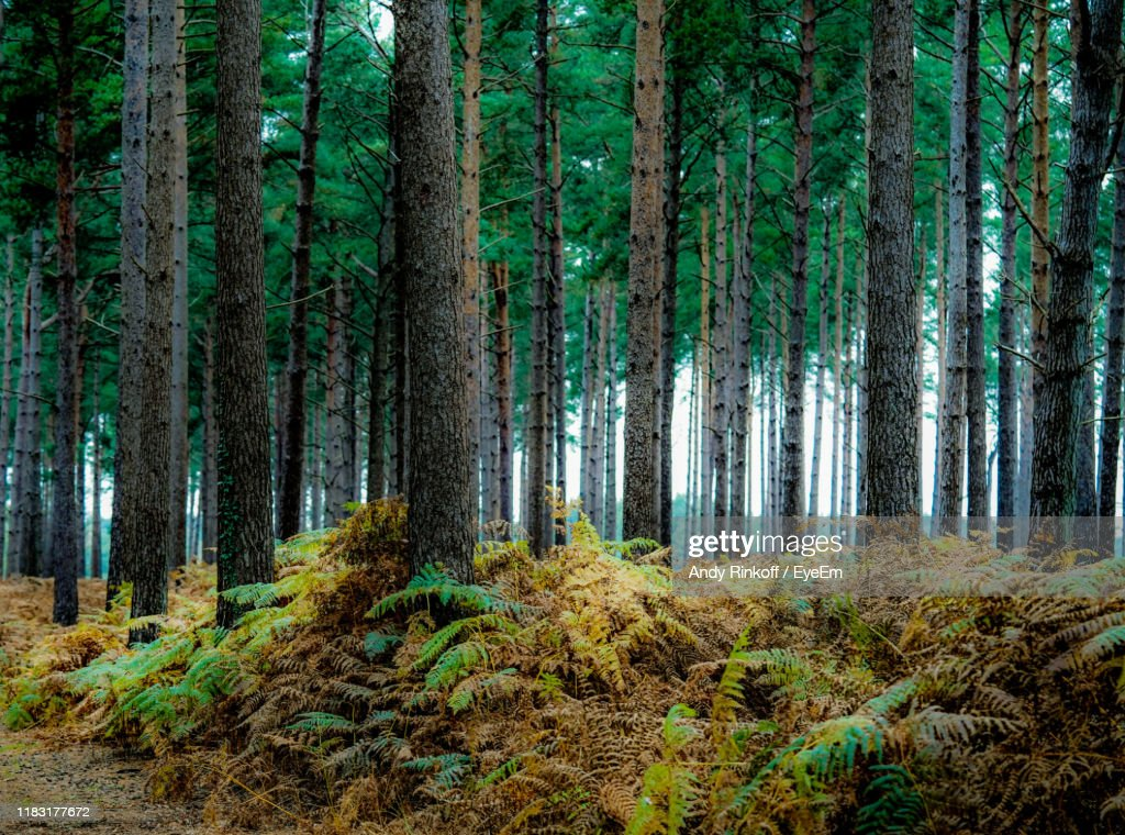 Trees Growing In Forest : Stock Photo