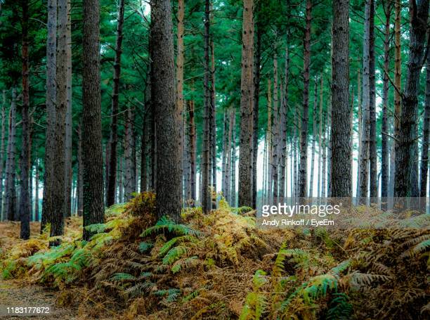 trees growing in forest - andy rinkoff stock pictures, royalty-free photos & images