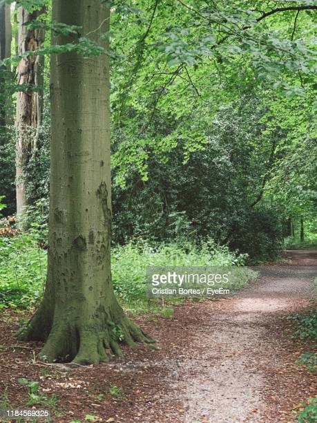 trees growing in forest - bortes stock photos and pictures